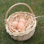 Les œufs sont bons pour la santé, mais pas ceux au fipronil !