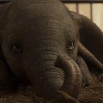 Dumbo, un cri d'alarme pour dénoncer la maltraitance des animaux