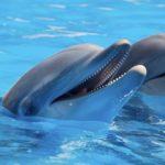 Captivité des dauphins et des baleines : le Canada dit «non» !